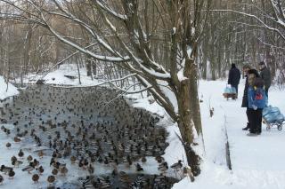Совместная прогулка за родниковой водой